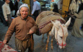 Man and his donkey - Aleppo souq, Syria