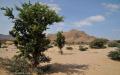 Desert scenery - between Berbera and Sheikh, Somaliand