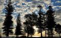 Trees - Puppy's Point, Norfolk Island