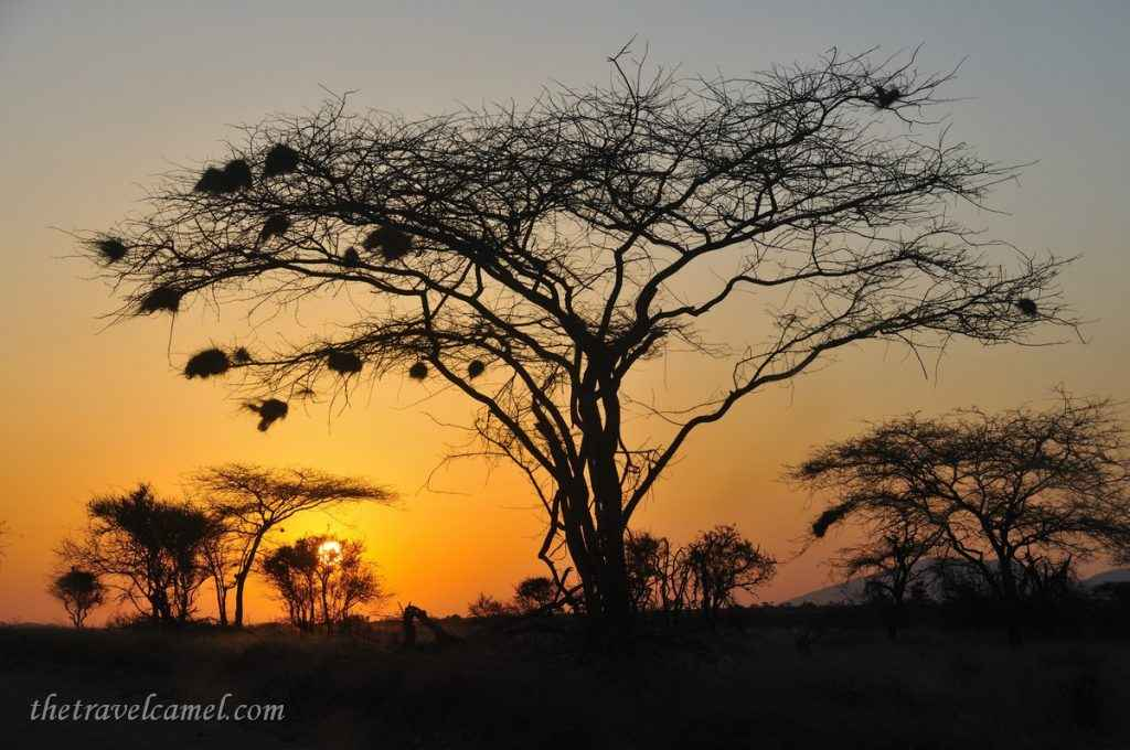 Sunrise – Samburu National Reserve, Kenya