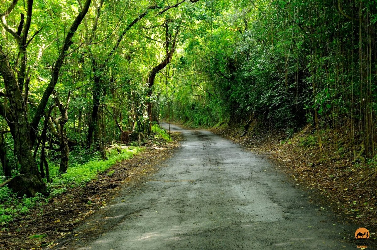 A Picturesque Road on St Kitts - St Kitts and Nevis