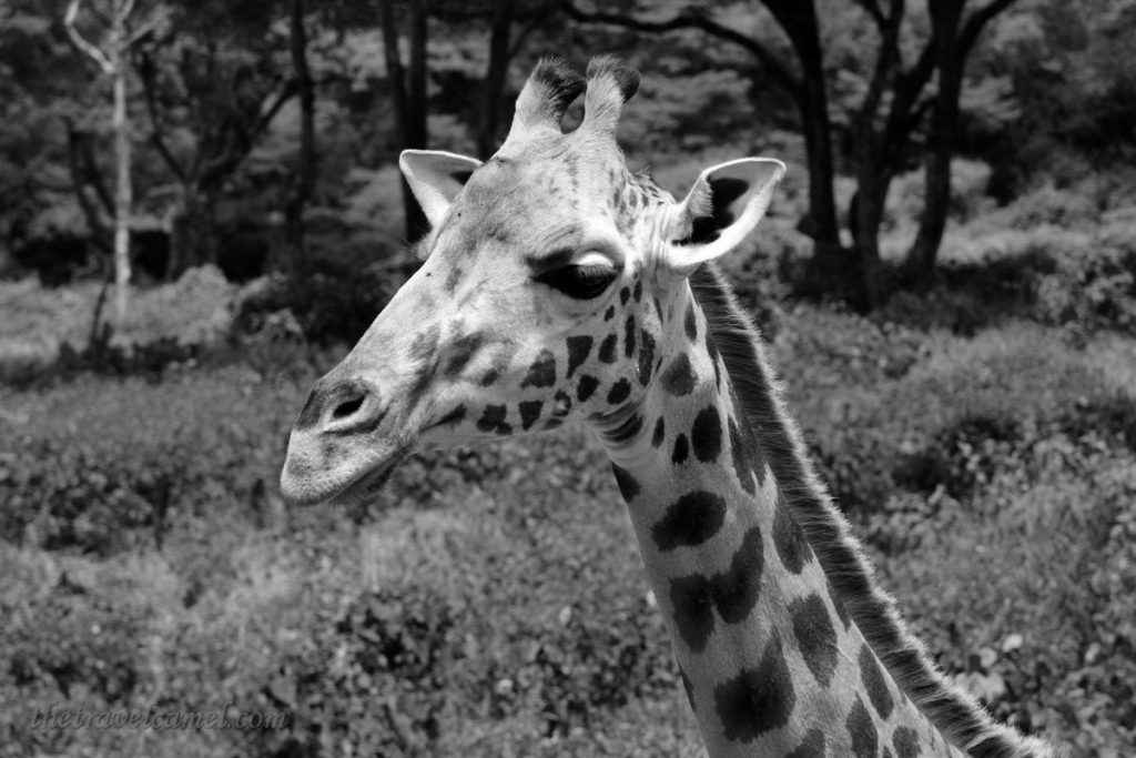 Animals BW 03 - Display