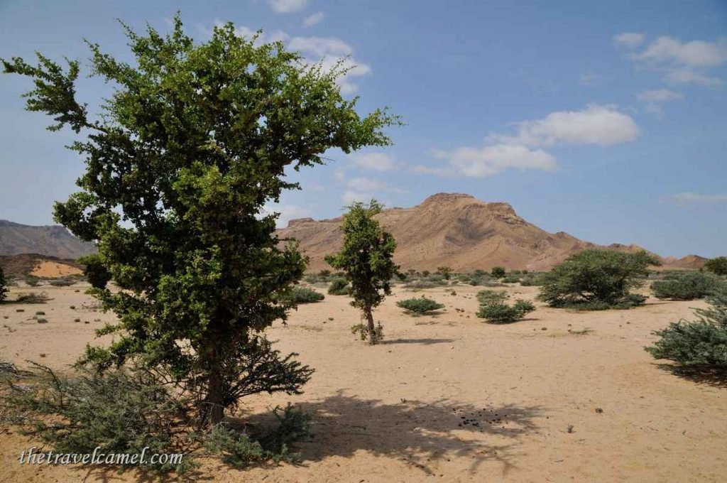 Desert scenery - between Berbera and Sheikh, Somaliand