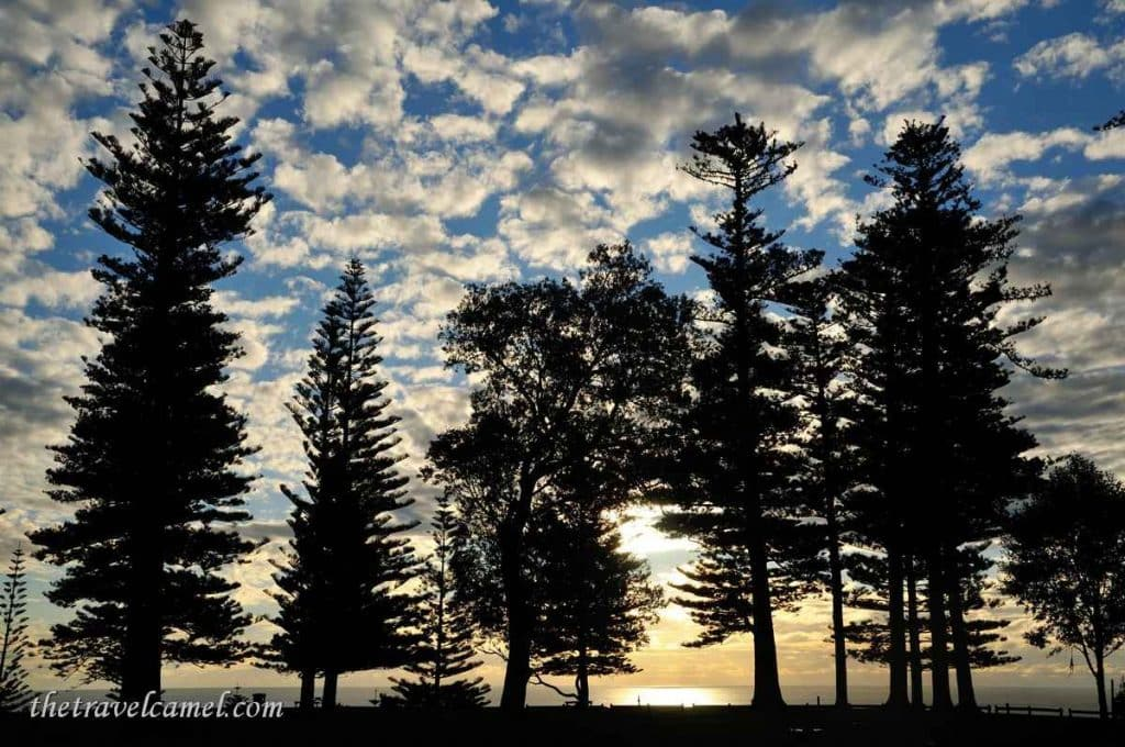 Trees - Puppy's Point, Norfolk Island
