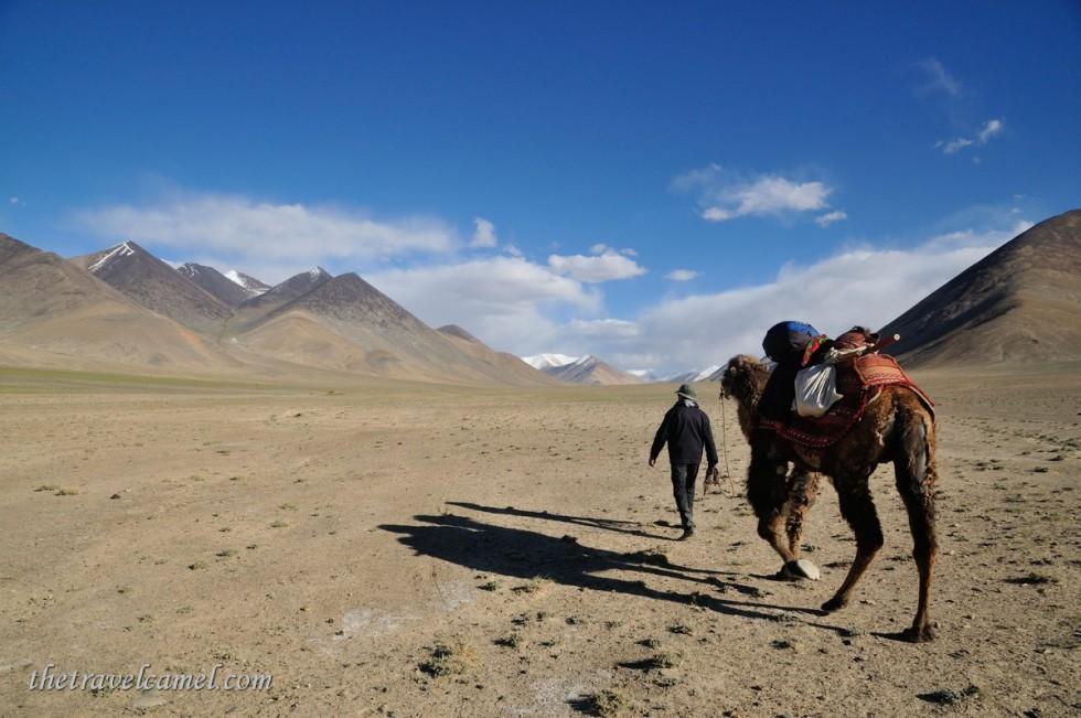 Camel trek - near Rang-kul, Tajikistan