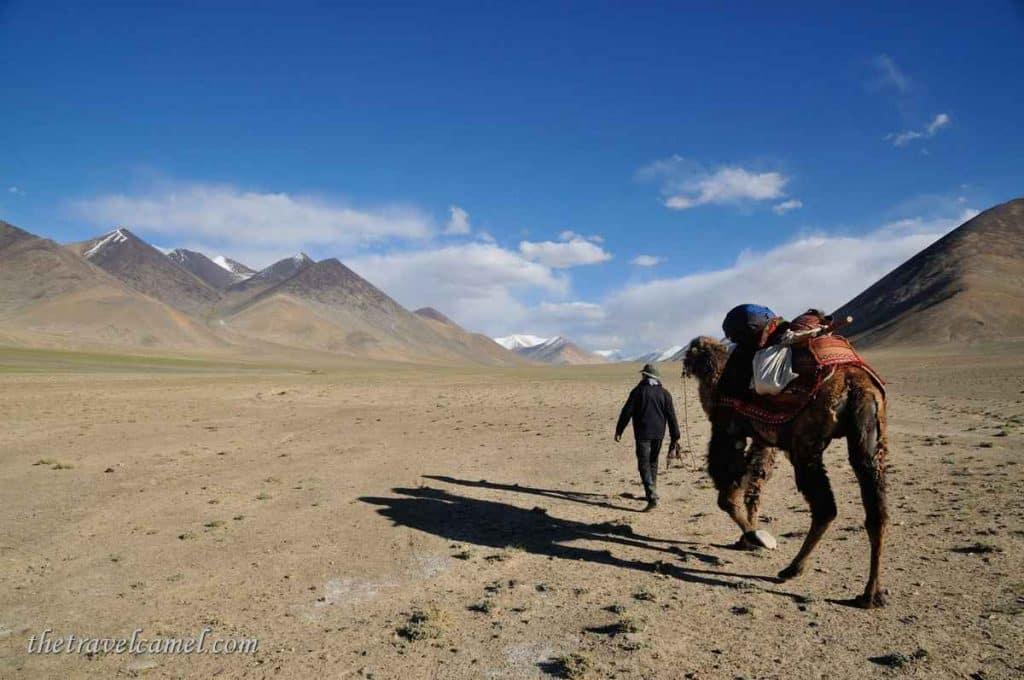 Camel trek – near Rang-kul, Tajikistan