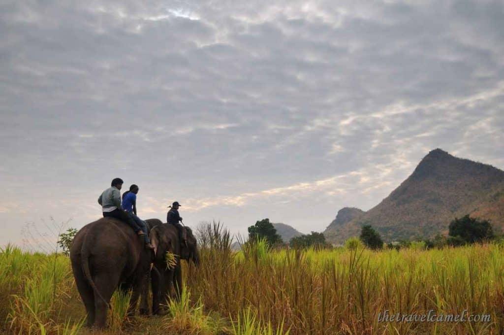 Elephant's World - Kanchanaburi, Thailand