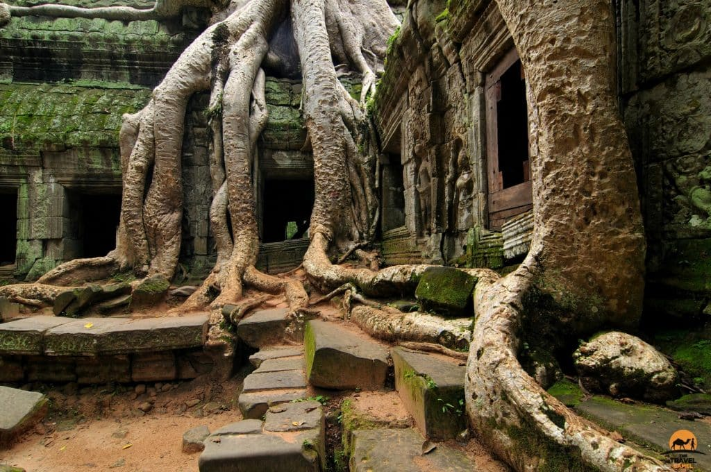 Nature Takes Command at Ta Prohm Temple - Siem Reap, Cambodia
