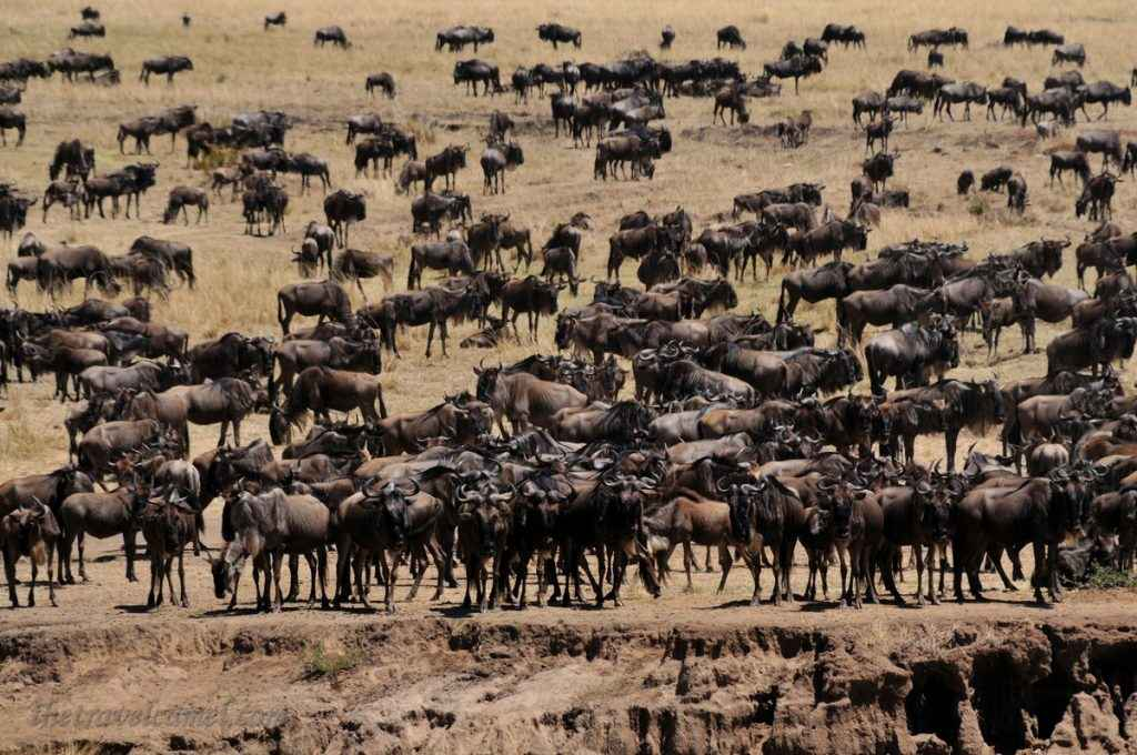 The Great Migration (photographed by The Travel Camel)